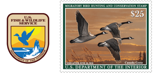 2017 Federal Duck Stamp Showing